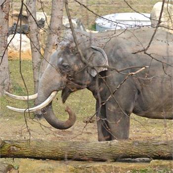 Nový sloninec v pražské zoo