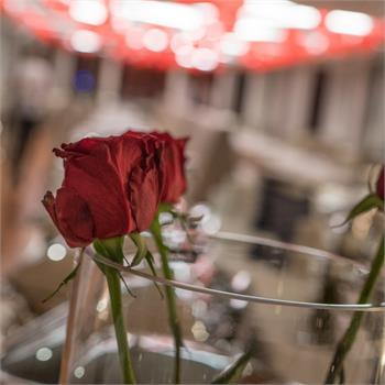 Valentýnské plavby