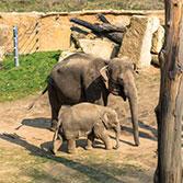 Parníky znovu vyplouvají do zoo