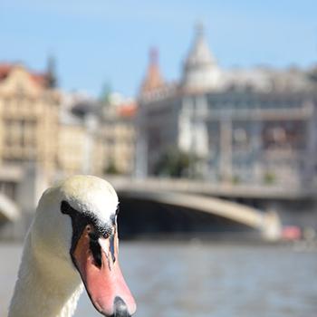 Praha ve fotografiích - pražské mosty